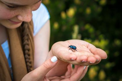 beetle-1422370_1920 (2)Thomas B
